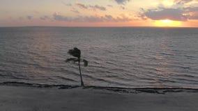 Silhouet van een solitaire palm die in de wind op een tropisch strand bij zonsopgang blazen stock footage