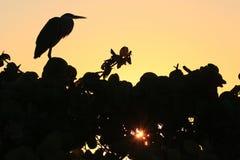 Silhouet van een vogel royalty-vrije stock foto's