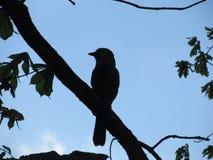 Silhouet van een vogelzitting op een boomtak contourlicht stock foto