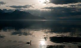 Silhouet van een zwaan Royalty-vrije Stock Foto