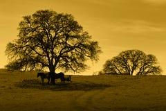Silhouet van Eiken Bomen en Paarden Stock Afbeelding