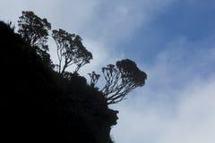 Silhouet van endemische installaties op Onderstel Roraima, Venezuela Royalty-vrije Stock Fotografie