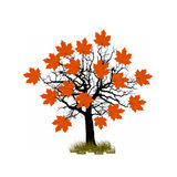 Silhouet van enige mooie esdoornboom Stock Foto