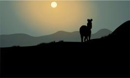 Silhouet van enige zebra Royalty-vrije Stock Foto's