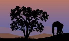 Silhouet van gorilla het lopen Royalty-vrije Stock Afbeelding
