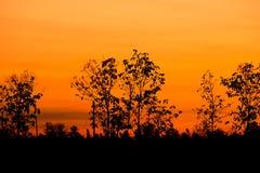 Silhouet van grote boom bij zonsondergang Royalty-vrije Stock Foto