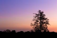 Silhouet van grote boom bij zonsondergang Stock Foto