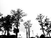 Silhouet van Gurjan-boom naast de landelijke die weg op witte achtergrond wordt geïsoleerd royalty-vrije stock afbeeldingen