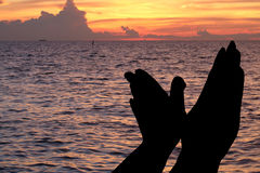 Silhouet van handen zoals vogel op strand dramatisch in de avond Stock Afbeeldingen