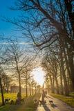 Silhouet van hondleurders bij een park bij zonsondergang Royalty-vrije Stock Foto