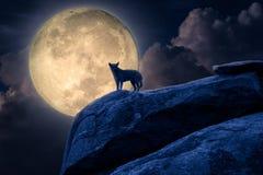 Silhouet van hondtribune tegen maanlicht op rots stock afbeeldingen