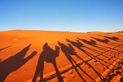 Silhouet van kameelcaravan in grote zandduinen van de woestijn van de Sahara, stock foto