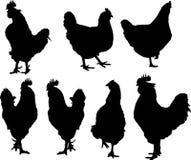 Silhouet van kippen en hanen Stock Afbeelding