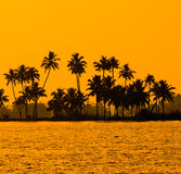 Silhouet van kokosnotenpalmen bij gouden tropische zonsondergang Royalty-vrije Stock Fotografie