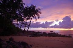 Silhouet van kokosnotenpalmen en zonsondergang Royalty-vrije Stock Fotografie