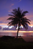 Silhouet van kokosnotenpalmen en zonsondergang Stock Foto's