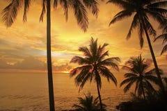 Silhouet van kokosnotenpalmen en zonsondergang Royalty-vrije Stock Afbeelding