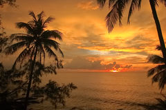 Silhouet van kokosnotenpalmen en zonsondergang Stock Foto