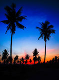 Silhouet van kokospalm stock afbeelding