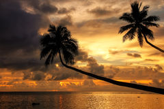 Silhouet van leunende palmen bij zonsopgang op Taveuni-Eiland, F Stock Foto