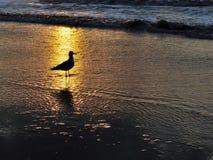 Silhouet van Meeuw bij Zonsondergang Stock Afbeelding
