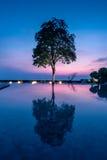 Silhouet van mooie boom met bezinning Stock Afbeelding
