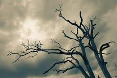 Silhouet van naakte boom Stock Foto