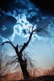 Silhouet van naakte boom tegen dramatische hemel Stock Foto