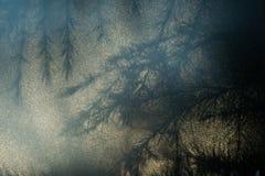 Silhouet van naalden en takken van een Cedar Cedrus-boom, door opalen glas worden gezien dat stock fotografie