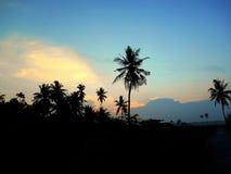 Silhouet van Ochtend en de Bomen Stock Afbeeldingen