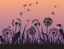 Silhouet van Paardebloembloemen in het gras vector illustratie