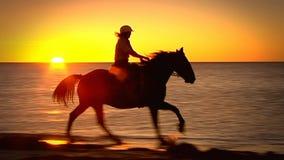 Silhouet van paarden het galopperen stock footage
