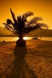 Silhouet van palm Royalty-vrije Stock Fotografie
