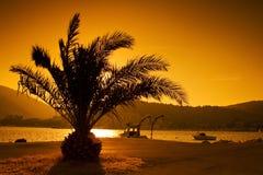 Silhouet van palm Stock Foto's