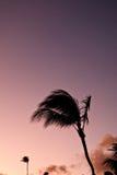 Silhouet van palm Stock Foto