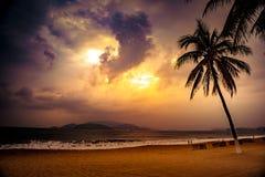 Silhouet van palm bij mooie tropische zonsondergang Stock Fotografie
