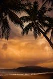 Silhouet van palm bij mooie tropische zonsondergang Stock Foto's