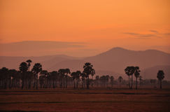 Silhouet van palm onder zonsondergang Stock Fotografie