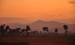 Silhouet van palm onder zonsondergang Royalty-vrije Stock Foto's
