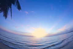 Silhouet van palmen stock foto