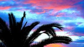 Silhouet van palmen royalty-vrije stock foto