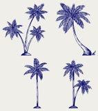 Silhouet van palmen Stock Afbeeldingen