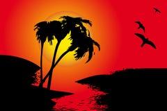 Silhouet van palmen stock illustratie