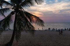 Silhouet van palmen bij zonsondergang op het strand stock foto's