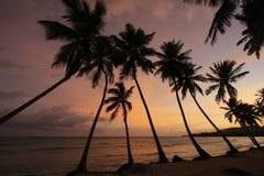 Silhouet van palmen bij zonsopgang, het strand van Las Galeras Stock Fotografie