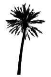 Silhouet van palmen realistische vectorillustratie Stock Afbeelding