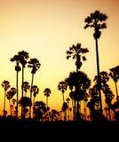 Silhouet van palmen in Thailand Royalty-vrije Stock Afbeelding