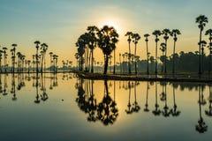 Silhouet van palmyrapalmen en hun bezinningen royalty-vrije stock foto's