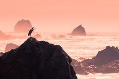 Silhouet van reiger die ruw water waarneemt om te vissen Royalty-vrije Stock Foto's