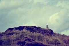 Silhouet van schapen op een berg stock afbeelding